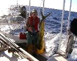 Mahi Mahi for dinner?  This one was about forty pounds